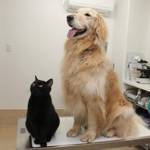 もうり動物病院