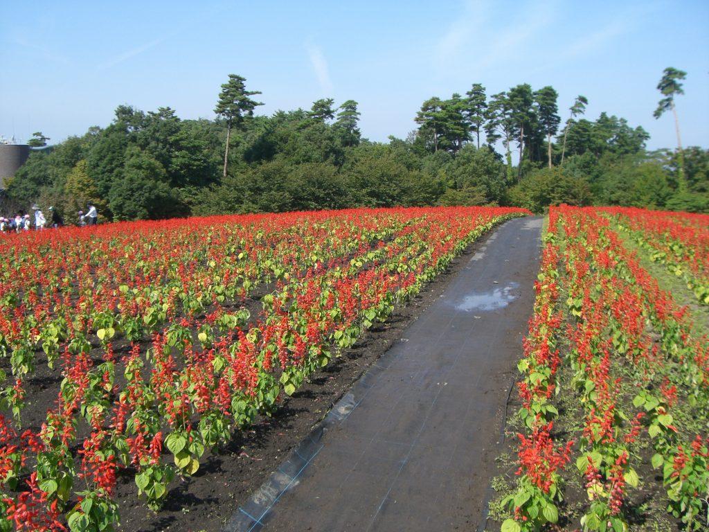 Attraction of flowers beyond appreciation -Tottori HANAKAIRO